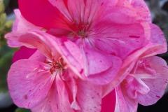 Pink-Batic